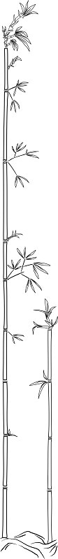Bambus 1000