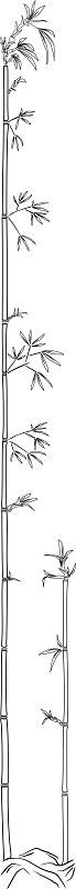 Bambus 1200